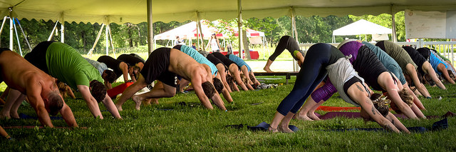 Several people in downward facing dog post on the grass